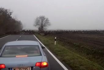 Fenséges látvány: több száz szarvas robogott át az úton Baranyában