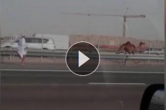 Ennél viccesebb jelenetet nem láthatsz autópályán
