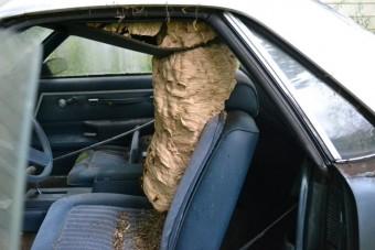 Brutális méretű darázsfészket találtak egy autó utasterében