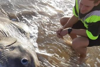 Tengeri szörnyet sodort partra a víz Ausztráliában
