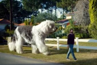 Az autóban elefánttá nő a kutyád