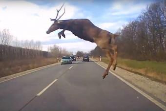 Igazán ritka felvétel készült egy autó előtt átugró szarvasról Borsodban