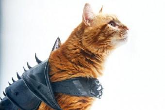 Ez lehet a világ legkeményebb macskája