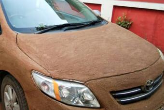 Marhatrágyát kocsijára kenve védekezett a nyári meleg ellen