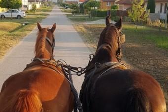 Ezt üzente egy magyar lovas az autósoknak