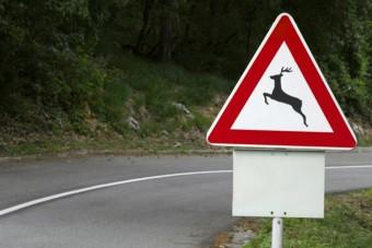 Megkezdődött a párzási időszak, nagyon óvatosan az utakon