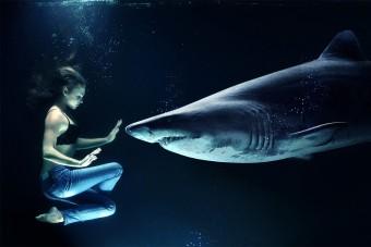 Így pusztítjuk el tömegesen a cápákat