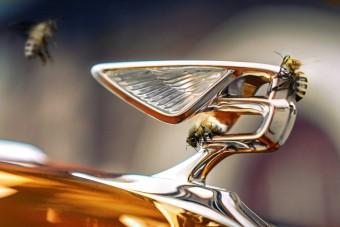 Méheket ment gyára mellett a Bentley