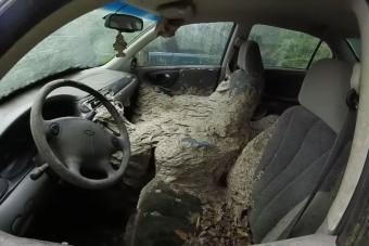Teljesen belakták a darazsak ezt az autót