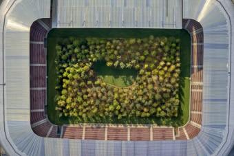 Erdő nőtt a stadion közepén, nem véletlenül