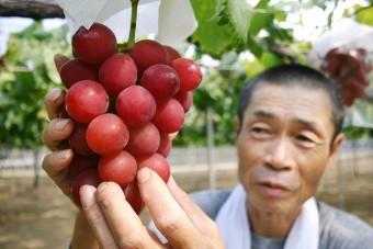 Százezret fizettek egy szem szőlőért