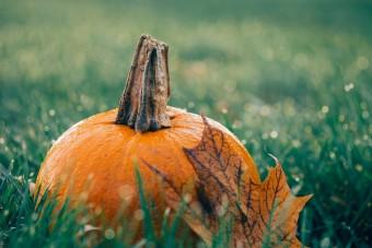 Tudod, mi a különbség a halloweeni és a sütőtök között?