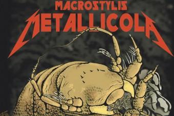 Különleges állatot neveztek el a Metallicáról