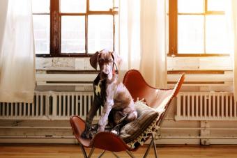 Három hónapnyi sört kap, aki befogad most egy kutyát