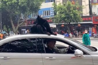 Nem volt hely a kocsiban, a tetőn utaztatta a kutyáját gazdája
