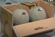 Beérett a japán kockadinnye 1