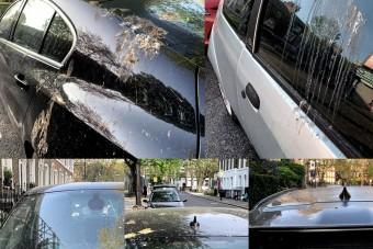 Mesterséges madárürüléktől marad szebb az autó
