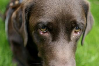 Kutya okozta egy nyugdíjas halálát