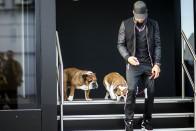 F1: Hamilton megőrült, vegánt csinált a kutyájából 1