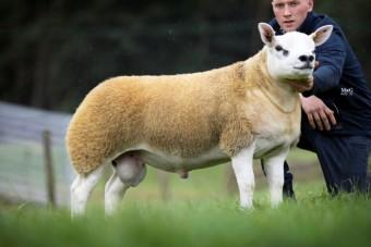 Gazdát cserélt a világ legdrágább báránya