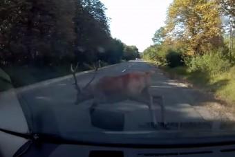 Eszméletlen felvételt készített egy hazai autós: centikre suhant el előtte a szarvas