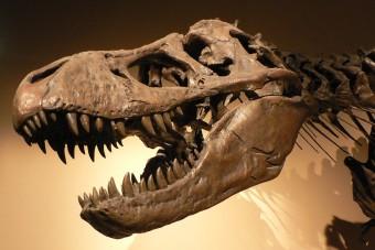 A T. rex unokatesójára bukkantak kutatók