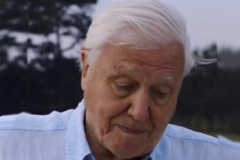Üzent a 94 éves David Attenborough: hatalmas a baj