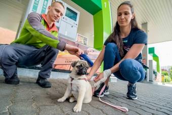 Kétezer kutyán segítettek a magyar benzinkutak