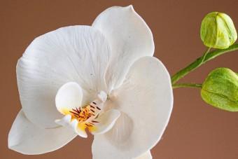 A cukrászat legmagasabb szintjét képviselik ezek a virágok