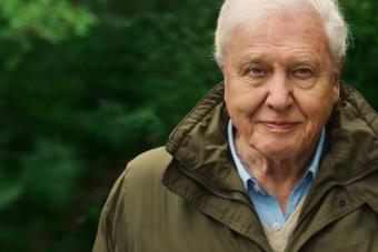 David Attenborough a szemünkbe mondja, hogy elpusztítottuk a természeti világot