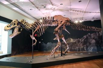 Brutális rekordáron kelt el Stan, a T-rex csontváza