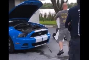 Meglepő vadállatot találtak egy Ford Mustang orrában