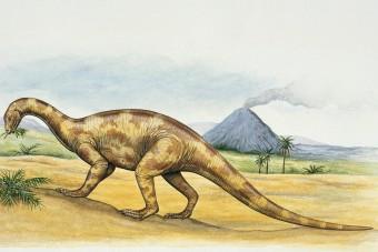 Digitálisan rekonstruálták egy dinoszaurusz agyát
