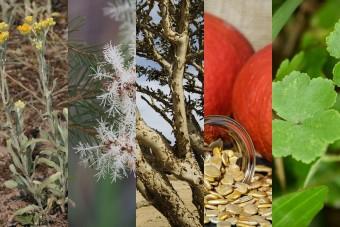 5 gyógynövény, melyeknek hálásak lehetnek a férfiak