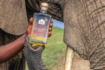Elefánttrágyából készült Afrika egyik legjobb röviditala