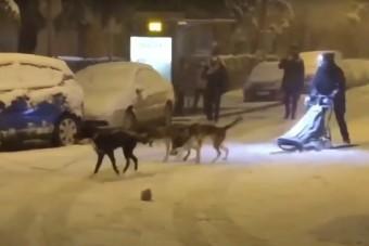 Madridra olyan hatalmas mennyiségű hó zúdult, hogy valaki kutyaszánnal közlekedik
