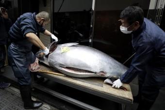 Milliókat fizettek az óriási tonhalakért a hagyományos vásáron