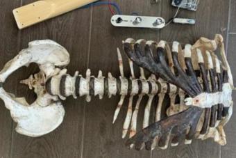 Halott nagybátyja csontjaiból épített gitárt egy metálrajongó