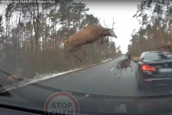 Vajon a biztosító hogy reagál, amikor meglátja ezt a videót a balesetről?