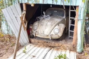 Értékes Bogár került elő egy elhagyott pajtából