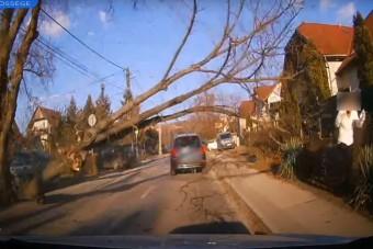 Jókora faág zuhant az autósok közé Csömörön, egy gyalogost majdnem agyonütött