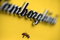 Már a lakásodnak is lehet Lamborghini-illata 2