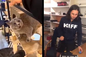 Egy macska furcsán nyávogni kezdett, a net zenészei pedig beindultak
