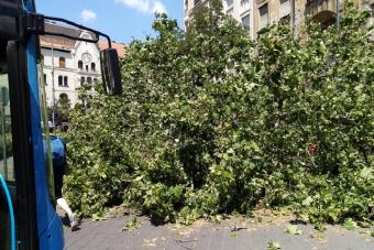 Kis híján fa dőlt egy BKK buszra a fővárosban