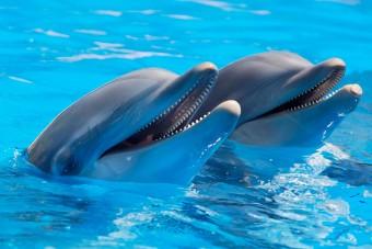Két kislány lenyúlta a szülők autóját, hogy delfinekkel ússzanak