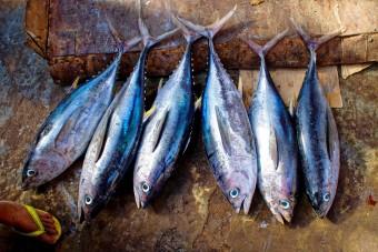 A műhús után itt a növényekből készült hal is