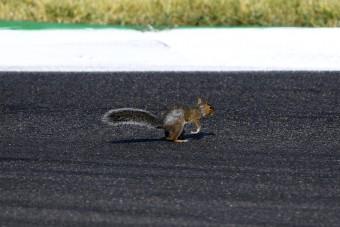 F1: Állatot gázolt Bottas